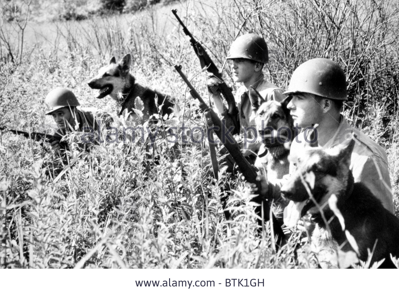 korean-war-soldiers-with-dogs