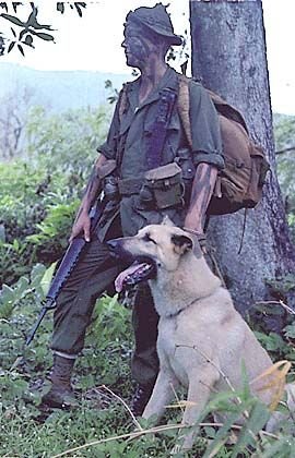 dogs and military vietnam war dog