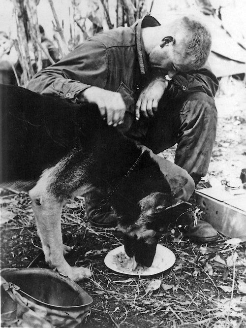 vietnam war soldier and dog